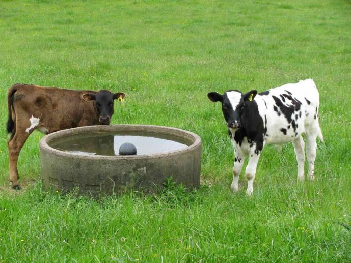 Organic dairy farmers reaping just rewards