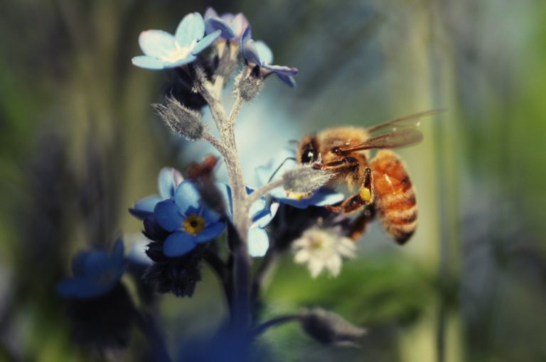 Save the bees – Ban neonics